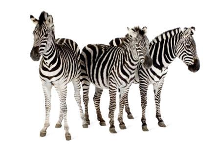 same-stripe