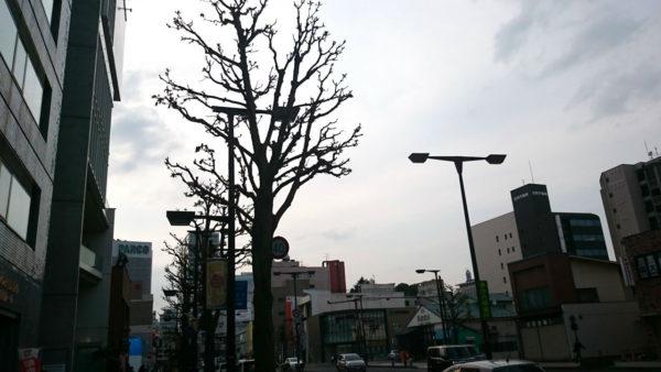 3--DSC_6310